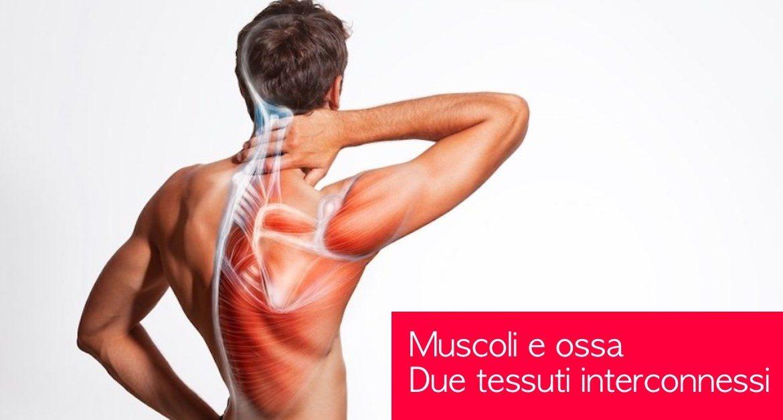 muscoli e ossa